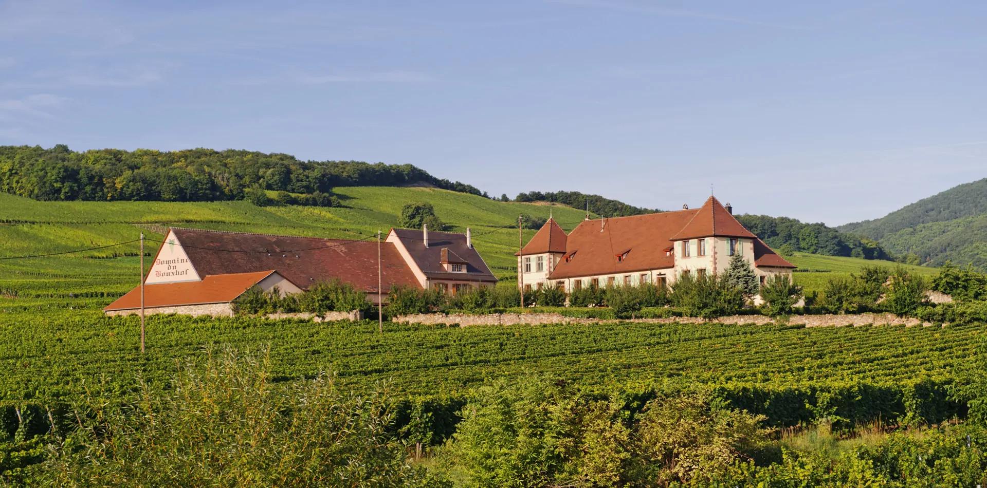 Domaine du Bouxhof : Producteur de vins d'Alsace près de Colmar