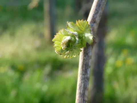 Producteur de vins d'Alsace près de Colmar