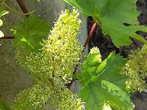 Producteur de vins d'Alsace